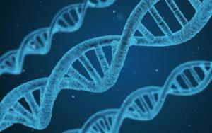 Nutrikind-Nutrition_Services_Genetic